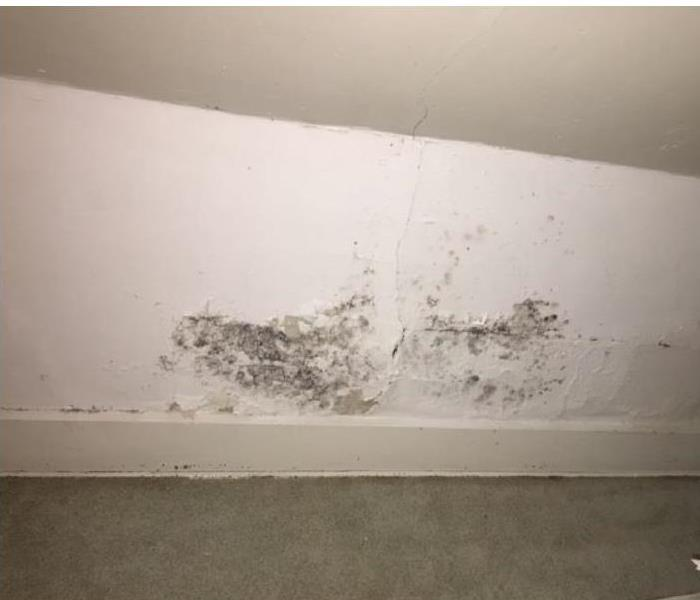 Surface mold in closet Before