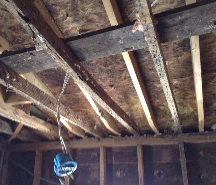 Mold on the sheeting and rafters