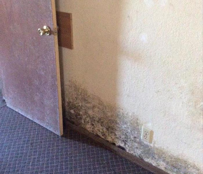 Apartment Building Mold